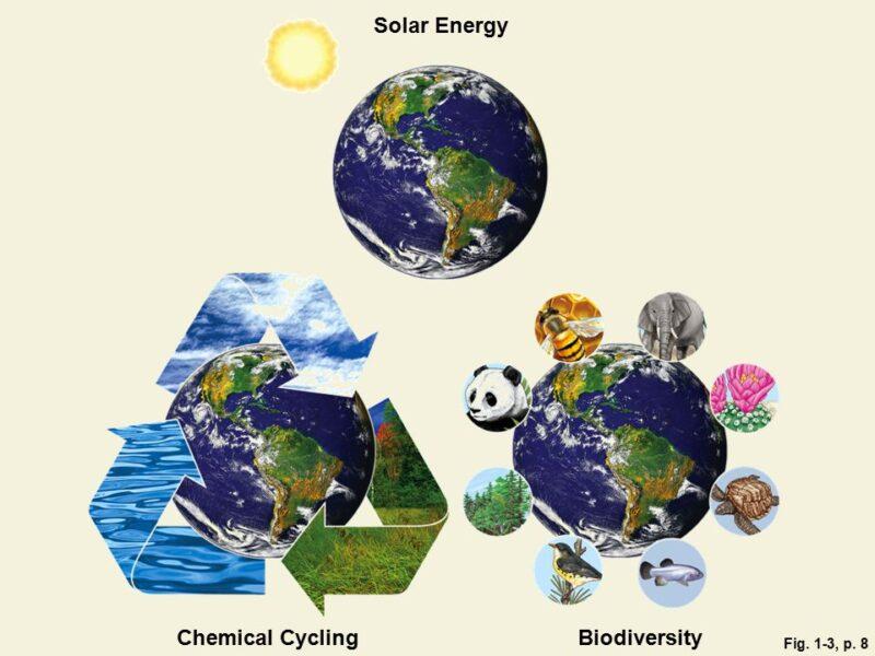 The Basic Principles of Sustainability